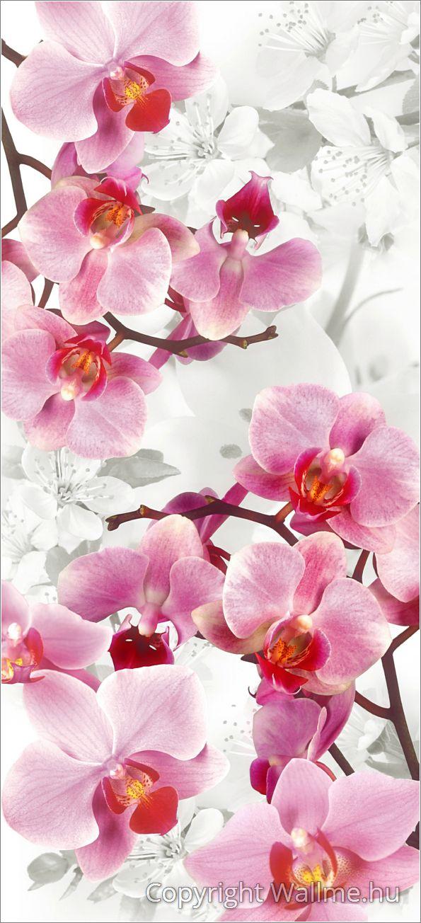 Keleties hangulatú művészi orchiea fotó