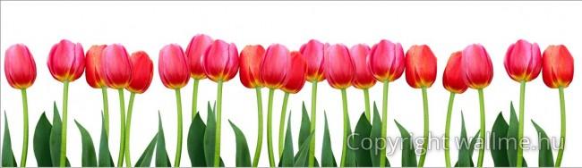 Háttér nélküli tulipán fotó