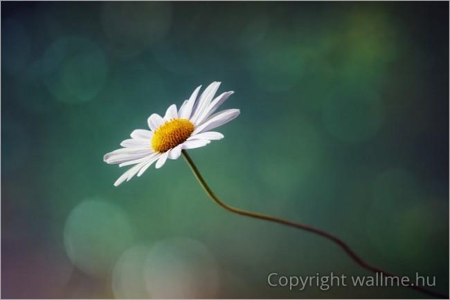 Egyszerű, minimalista stílusú természetfotó
