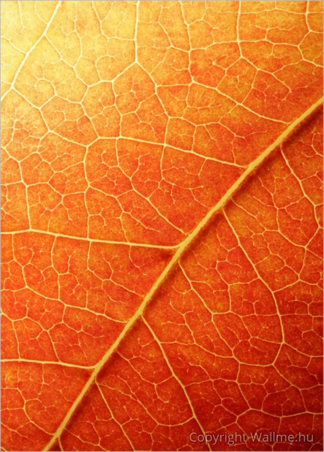 őszi falevél dekorációs kép