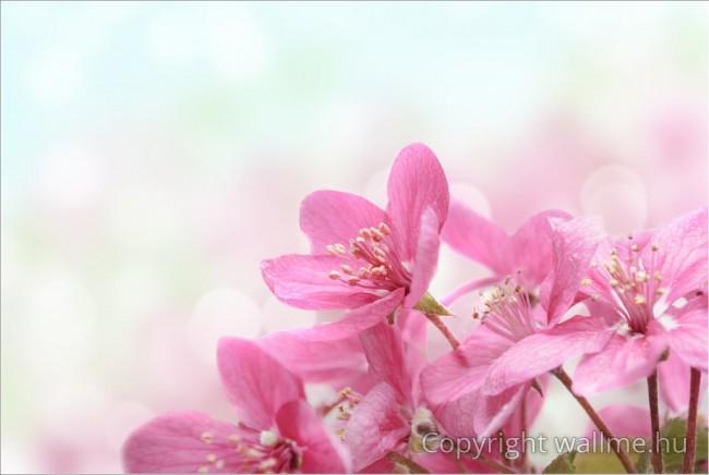 Itt a tavasz! Közeli fotó kerti virágokról