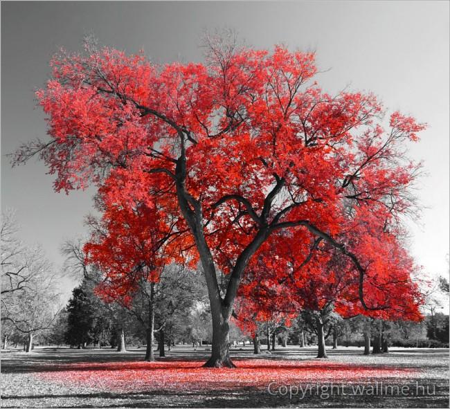 Vörös színkiemelés