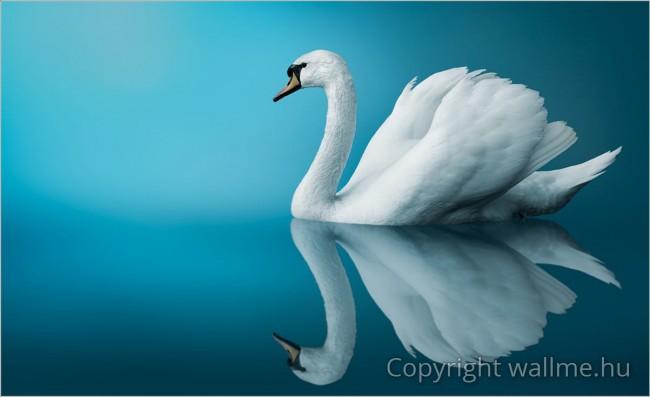 Csodálatos és inspiratív fotó az egyik legszebb és legnépszerűbb madárról.