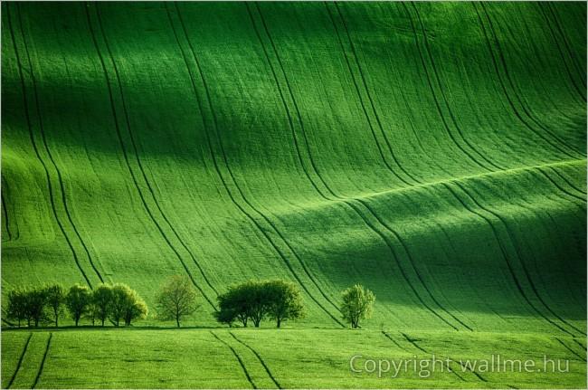 Látványos zöld színű tájkép egy morvaországi zöld rétről