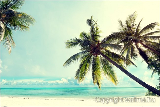Pálmafás tengerpart fotó