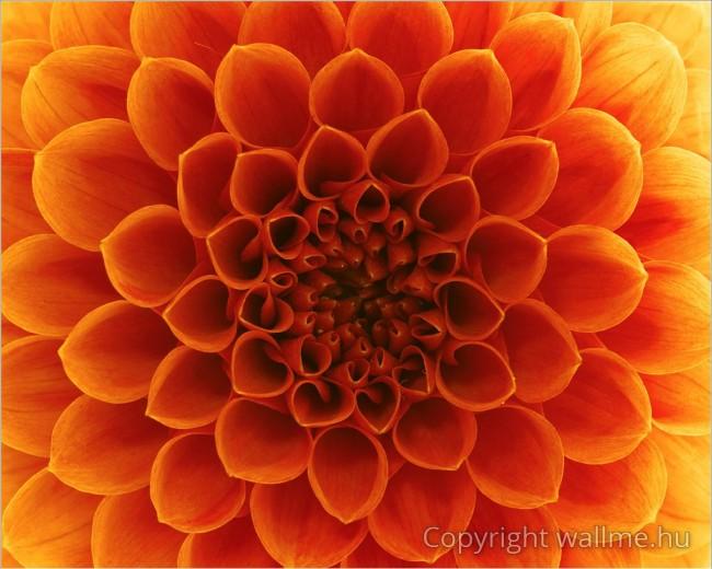 Absztrakt virágszirmok