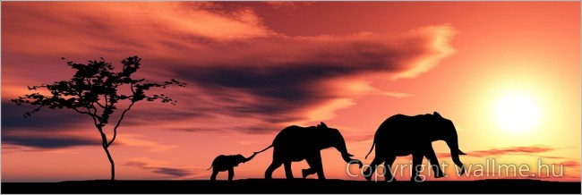 Az elefánt család