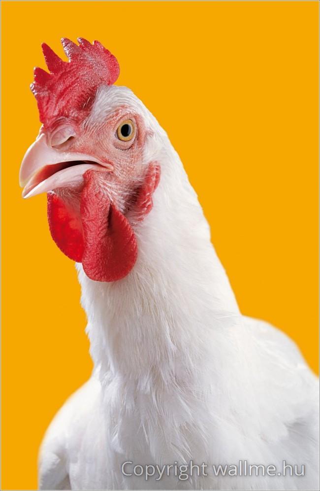 Csirke Portré