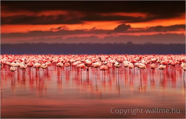Flamingók Tava