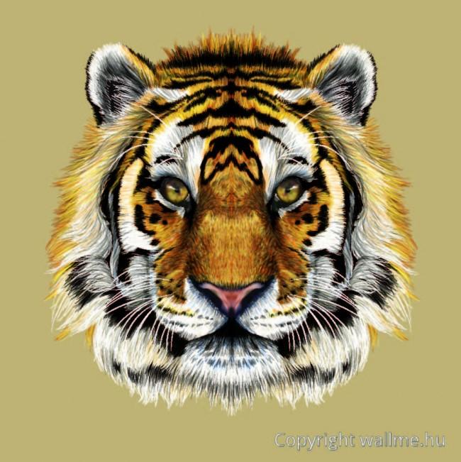 tigris_portre