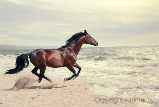 Vágtázó Ló