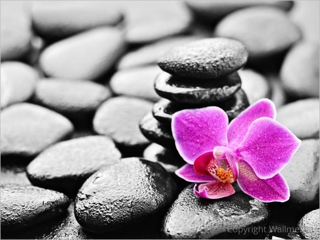 Zen csendélet dekorációs kép
