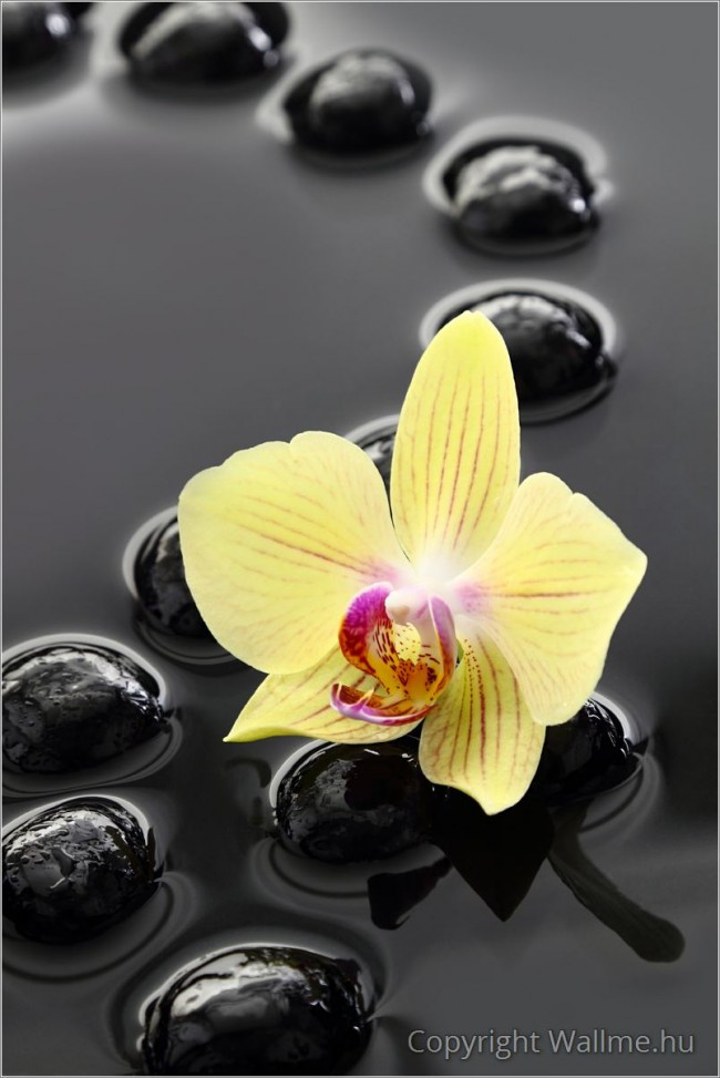 Zen hangulatú meditatív fotó