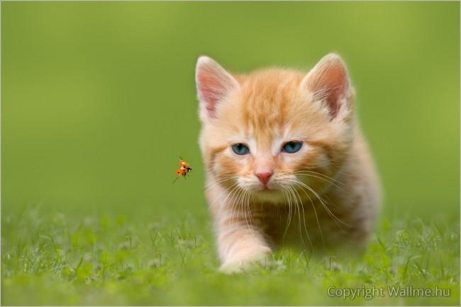 Macska a zöld réten