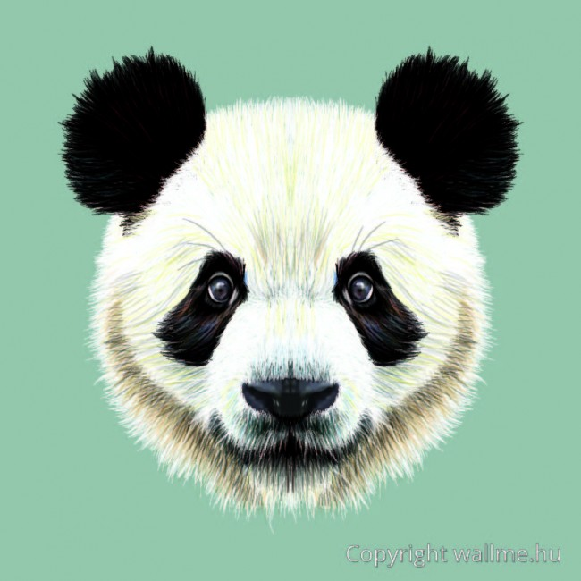 panda_portre