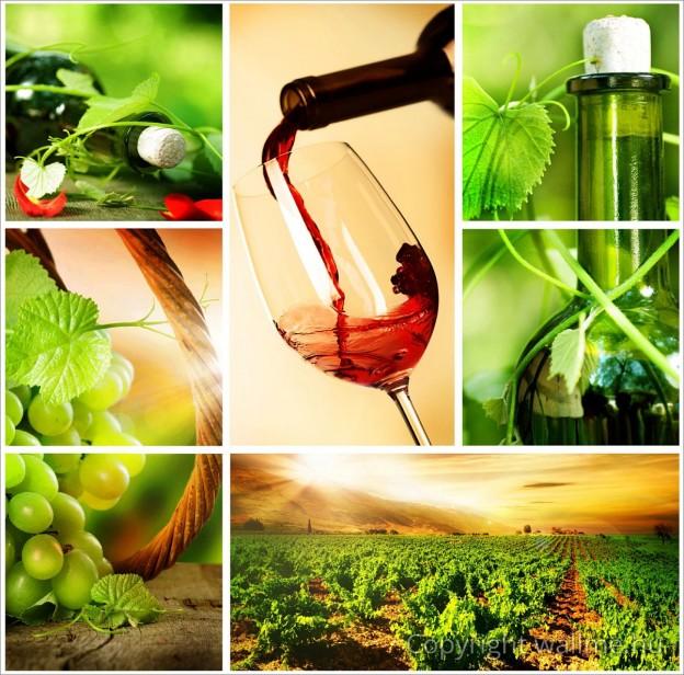 borban-az-igazsag